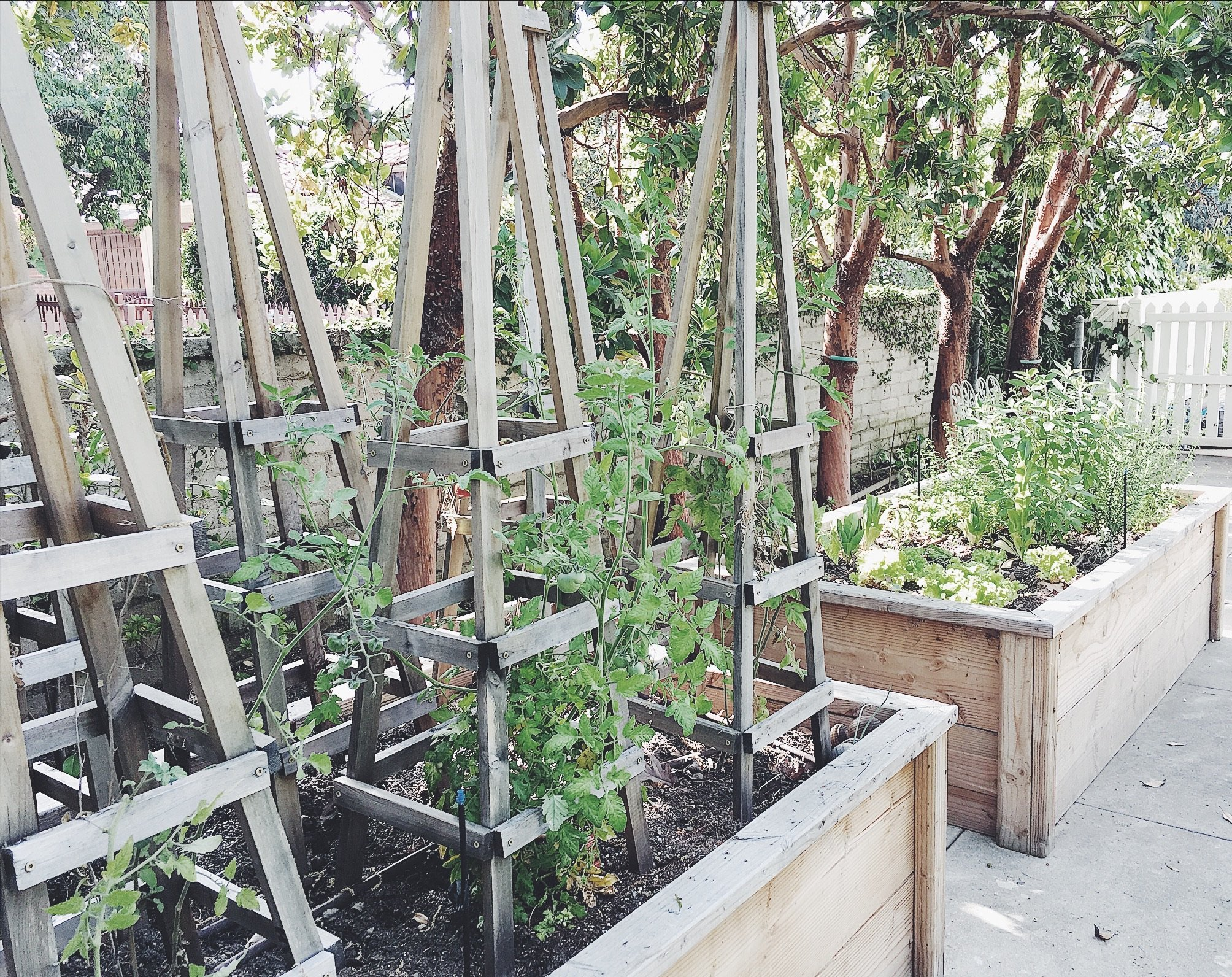 Relatively AROUND THE HOUSE // Raised Vegetable Beds + Tomato Trellis - My  OB77