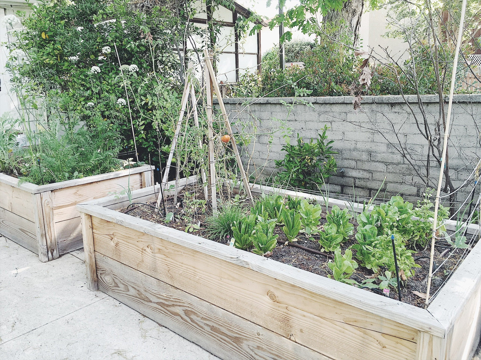 raised vegetable bed MIY.JPG