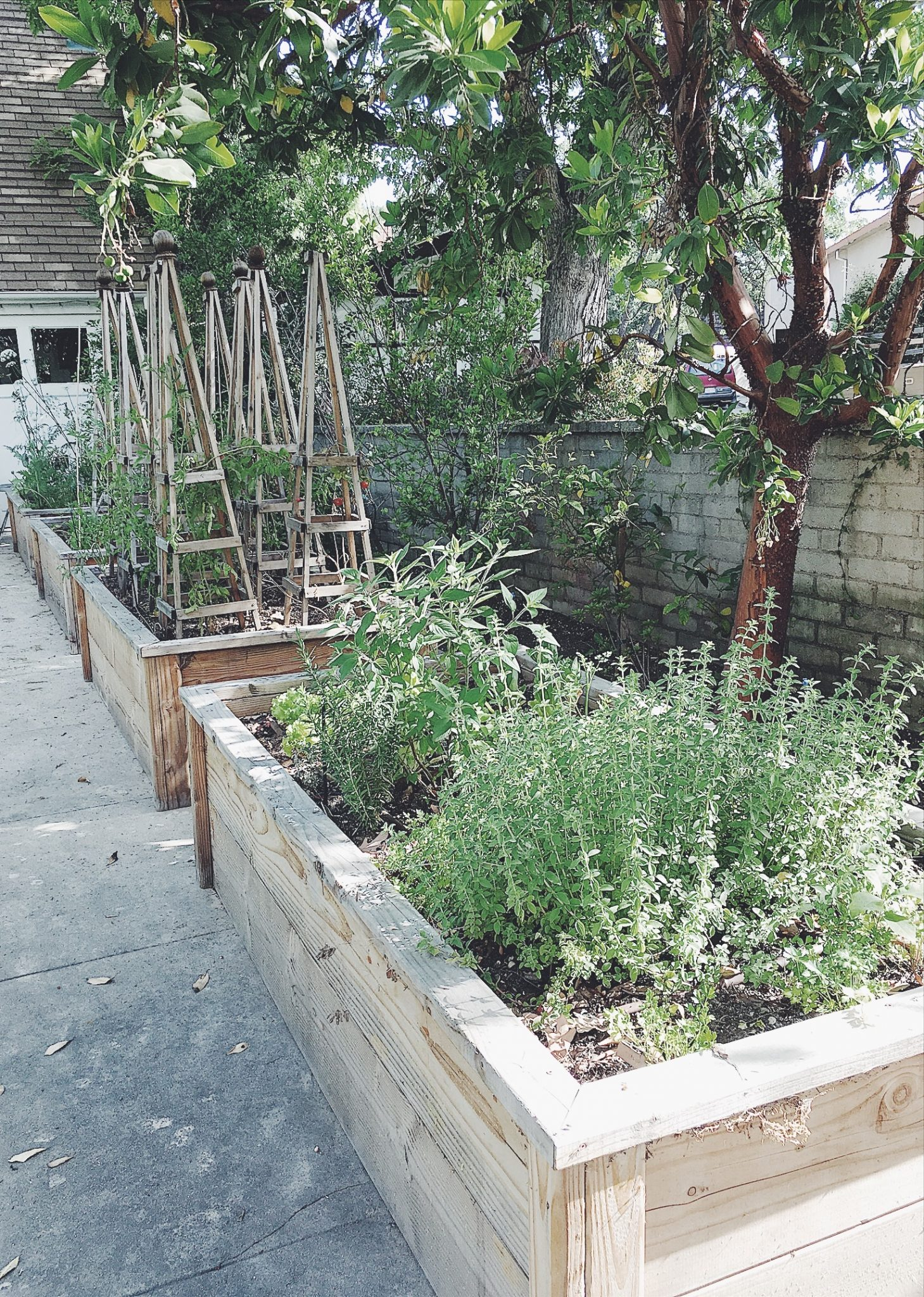 raised vegetable beds.JPG