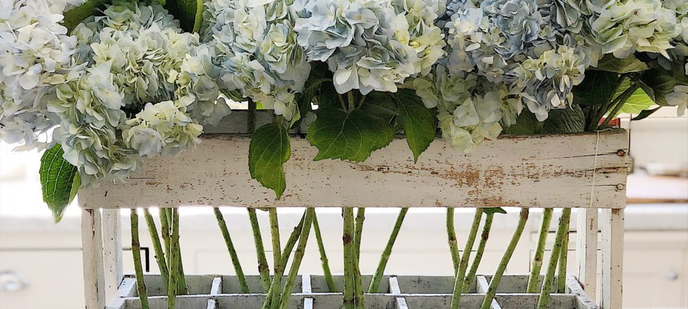 How to Arrange Hydrangea Flowers