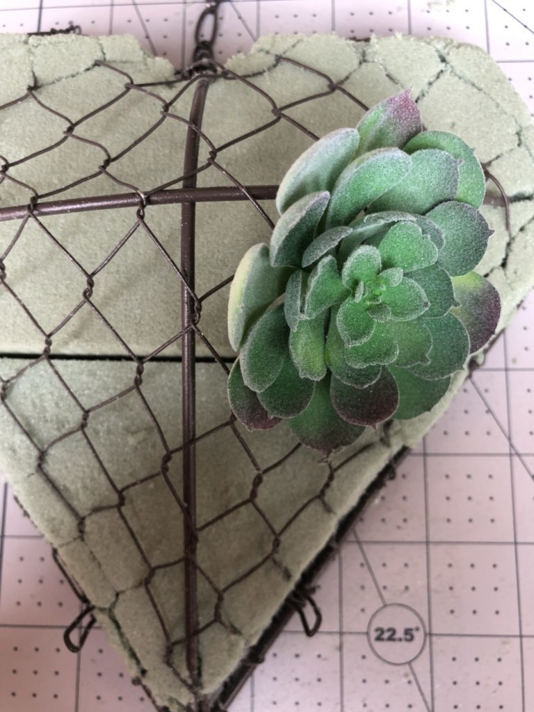 heart shaped succulent 2