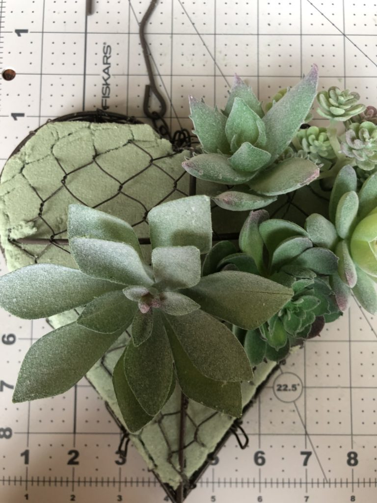 heart shaped succulent 3