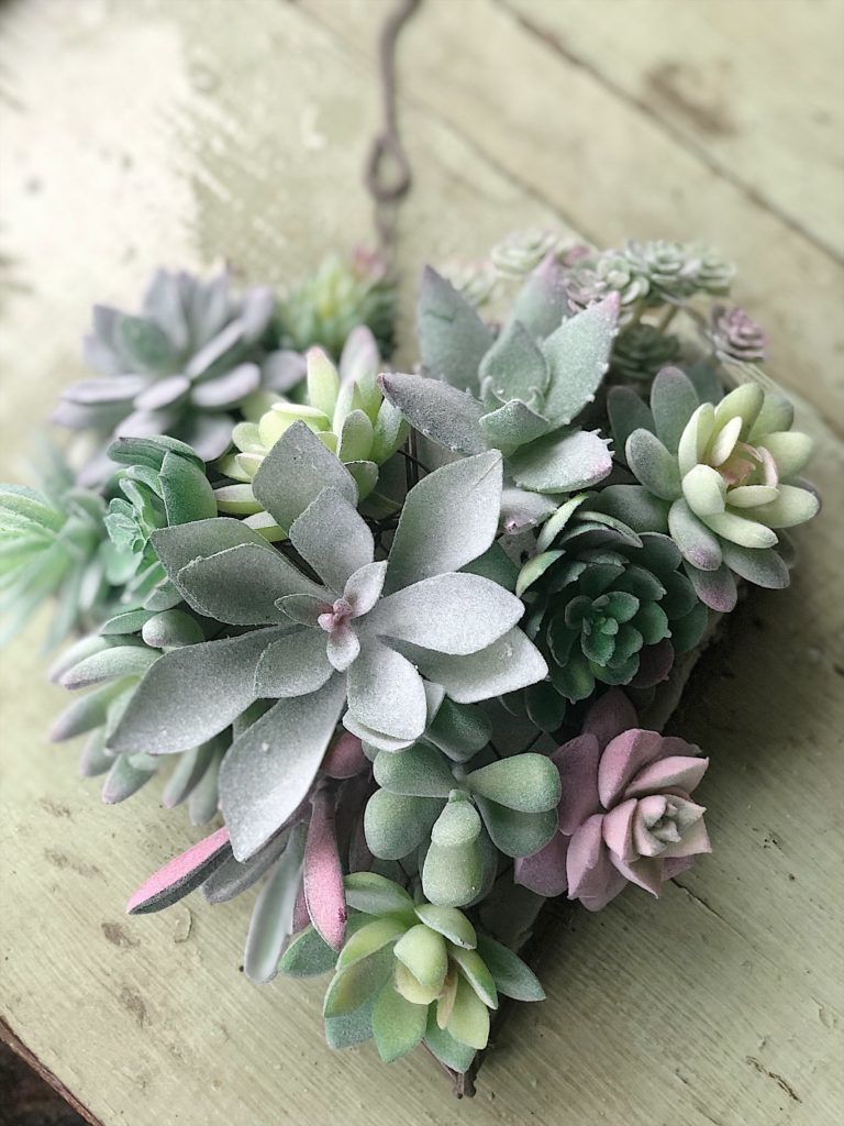heart shaped succulent 5