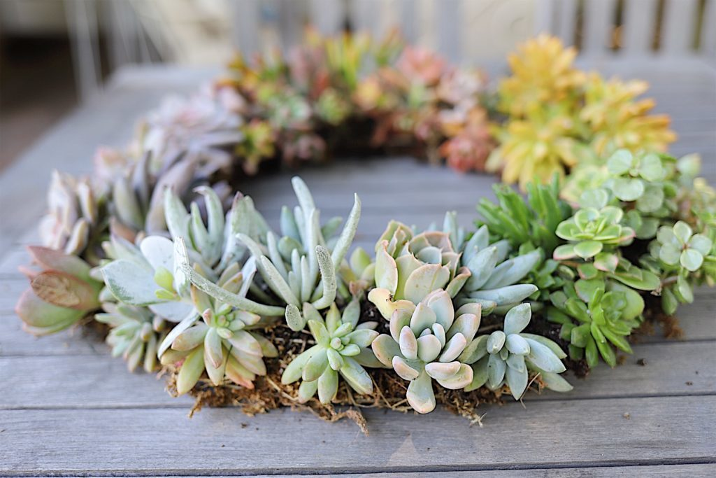 how to make a succulent wreath 1
