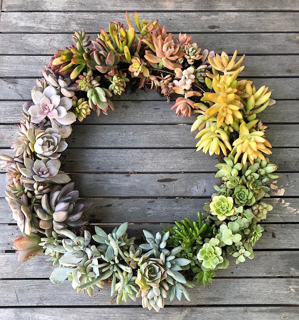 how to make a succulent wreath DIY