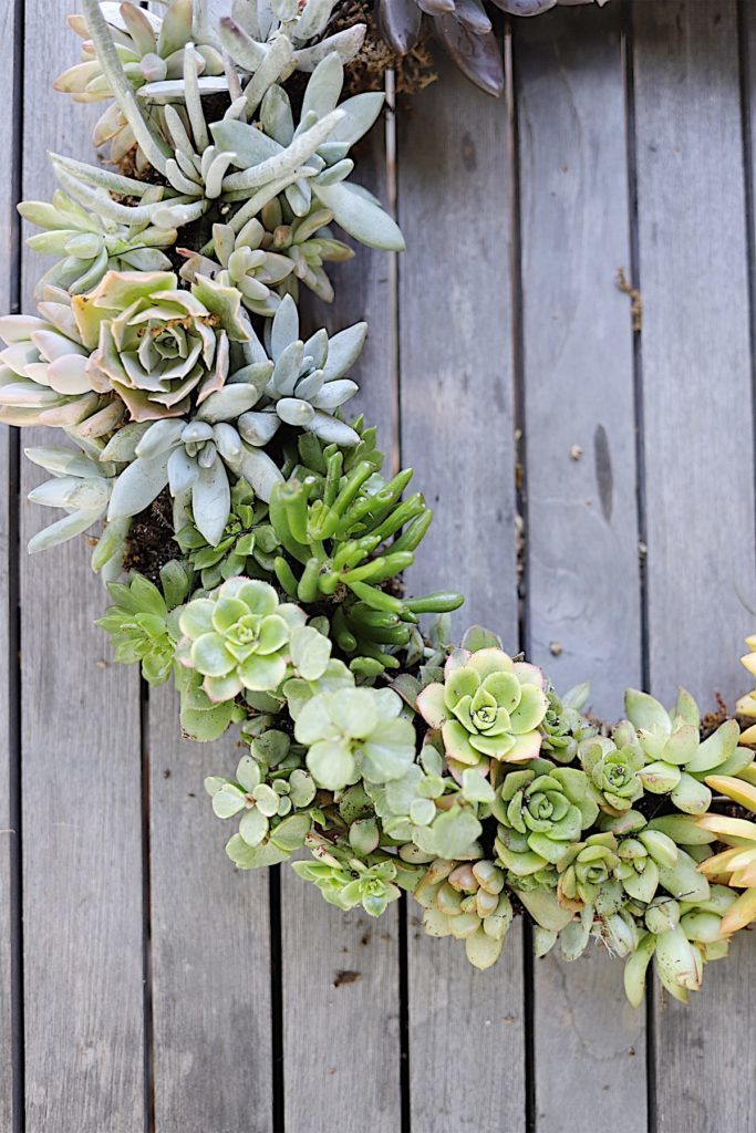 how to make a wreath with succulent plants