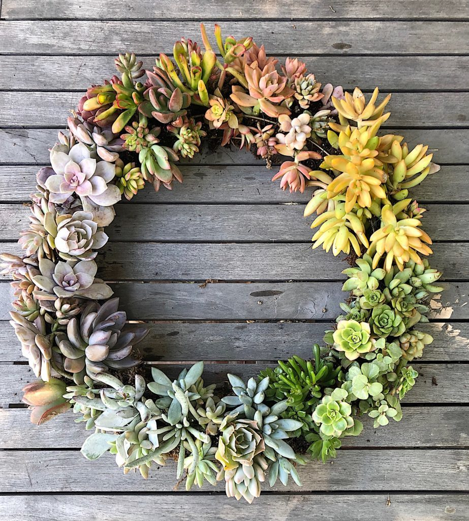 how to make a wreath with succulents 1