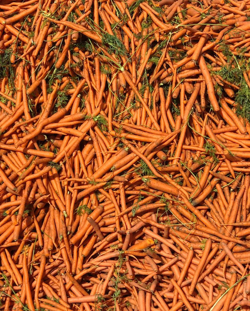 facts about carrot consumption