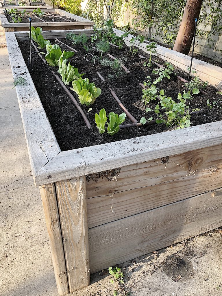 Raised Vegetable beds