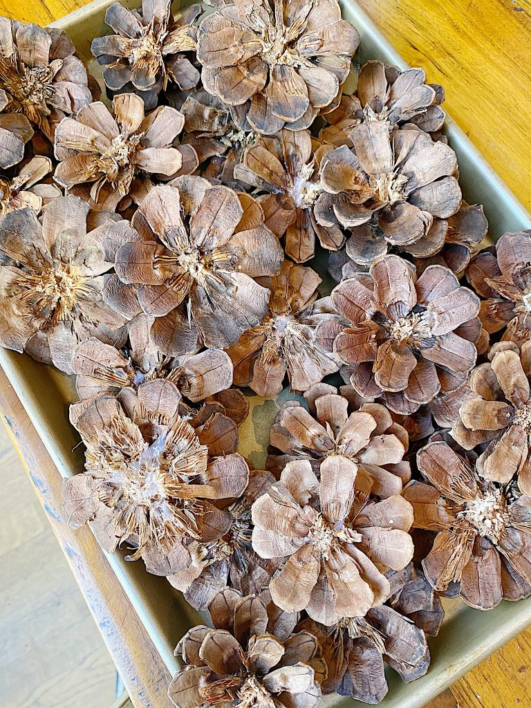 cut pine cones for wreath