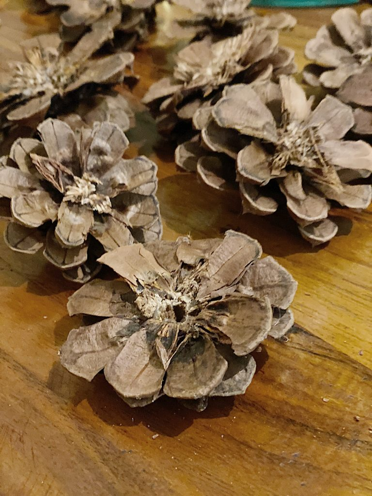how to cut pinecones for wreath