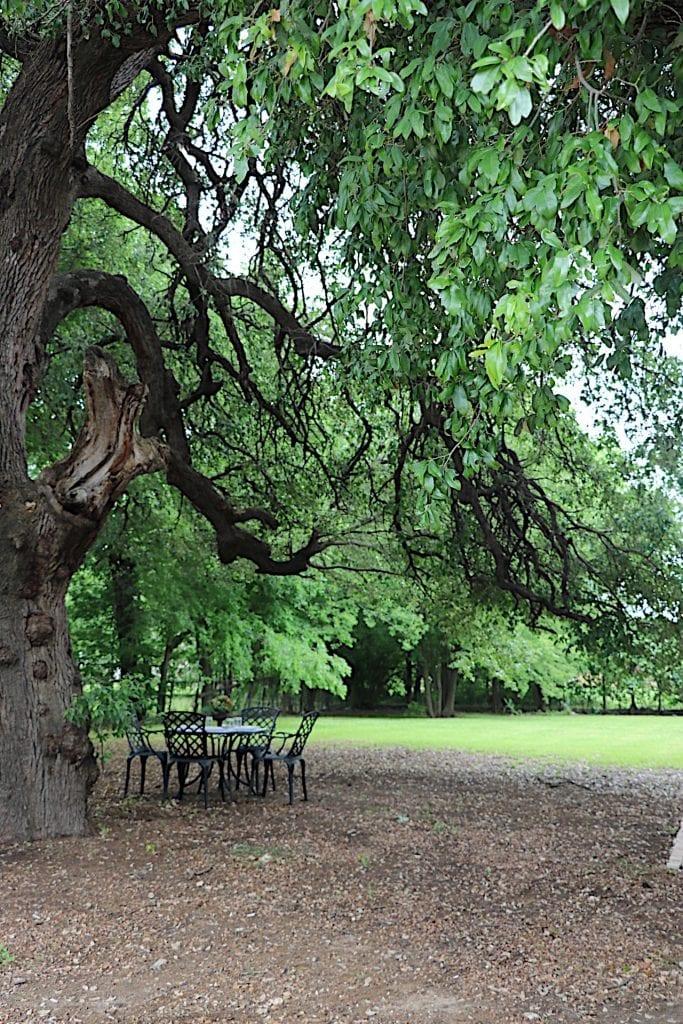 Dining Under the Oak Tree
