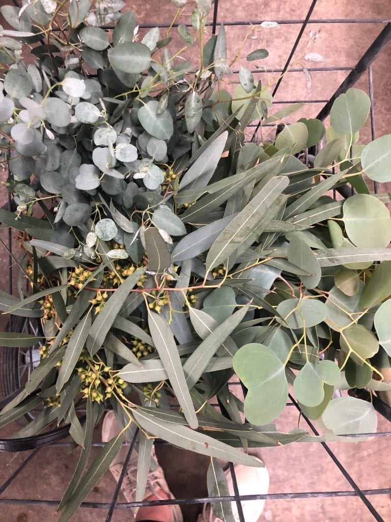 Fresh Eucalyptus at the Flower Mart