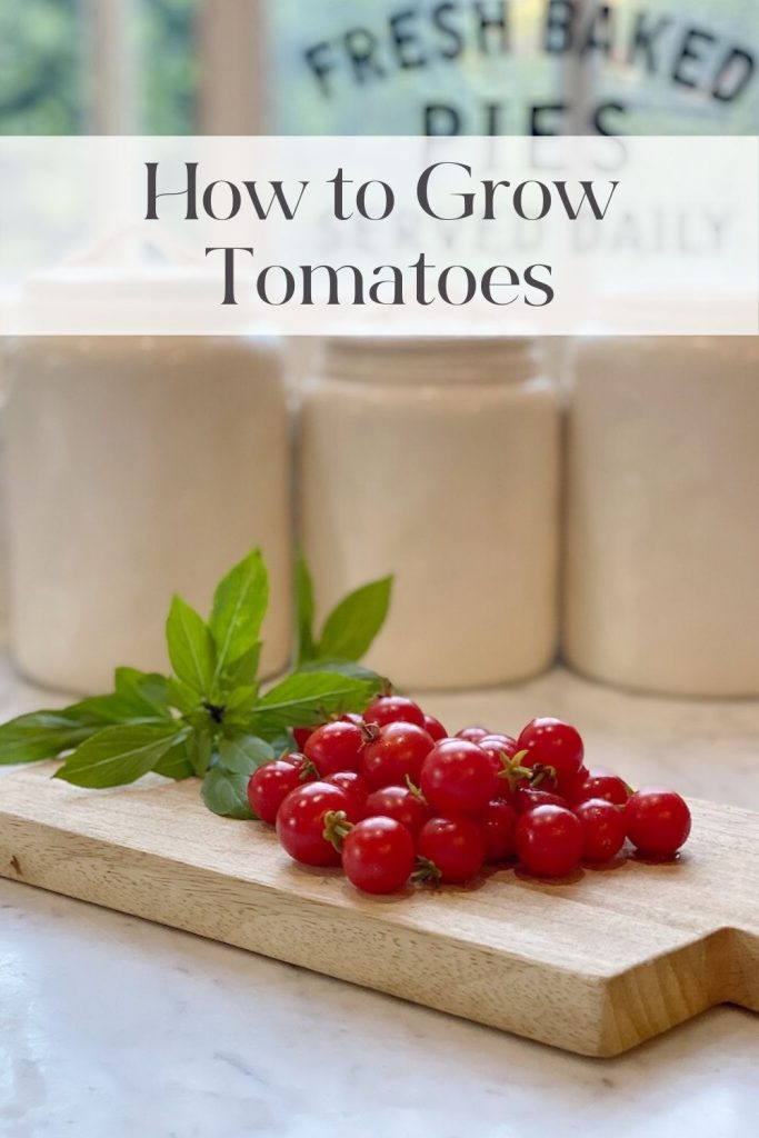 How to Grow Tomatoes.