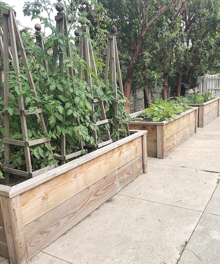Raised Tomato and Vegetable Beds