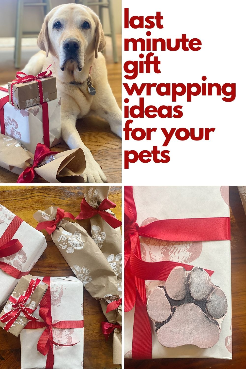 Today my dog Sport and I are very excited to share some creative pet gift wrapping ideas. We made wrapping paper and came up with some very fun ideas for pets to give their families.