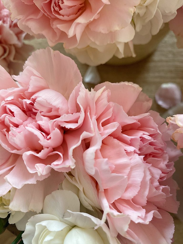 Old Fashioned Carnations