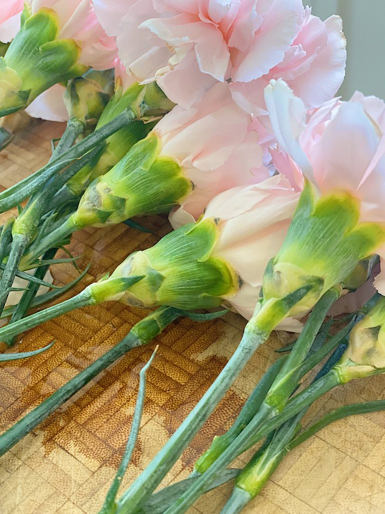 Recutting Pink Double Carnations