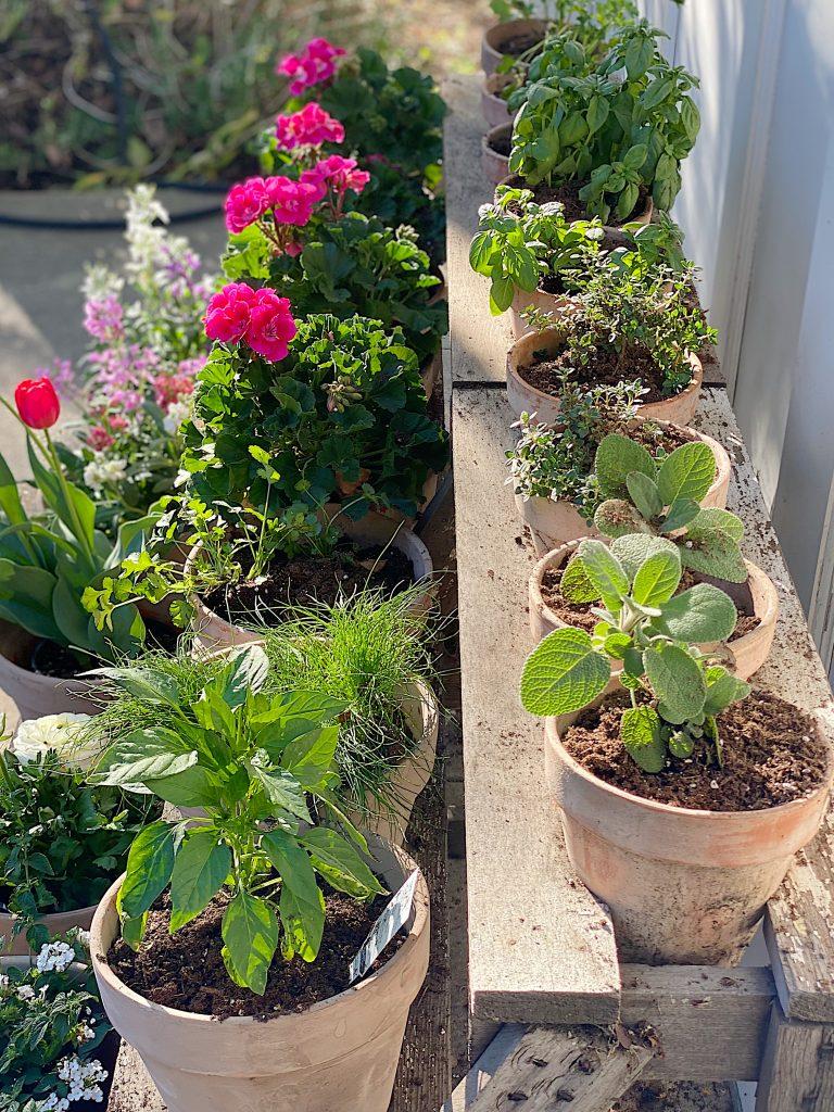 Plant a Spring Garden