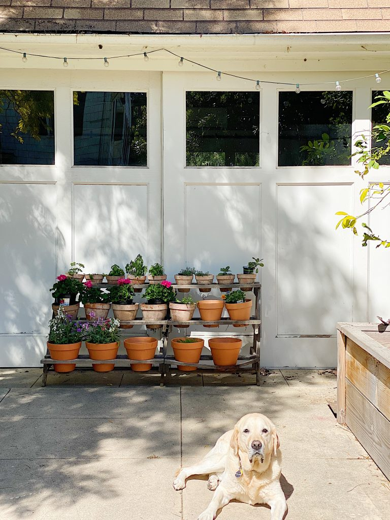 Why I Need Vintage Garden Pots