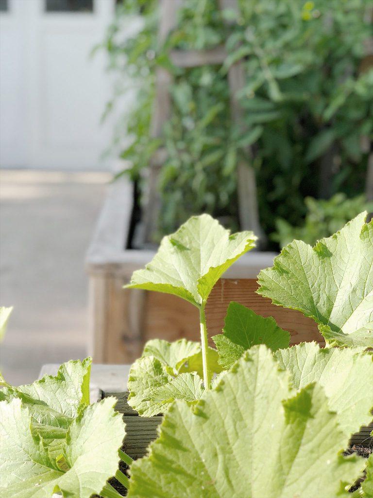 my-vegetable-garden