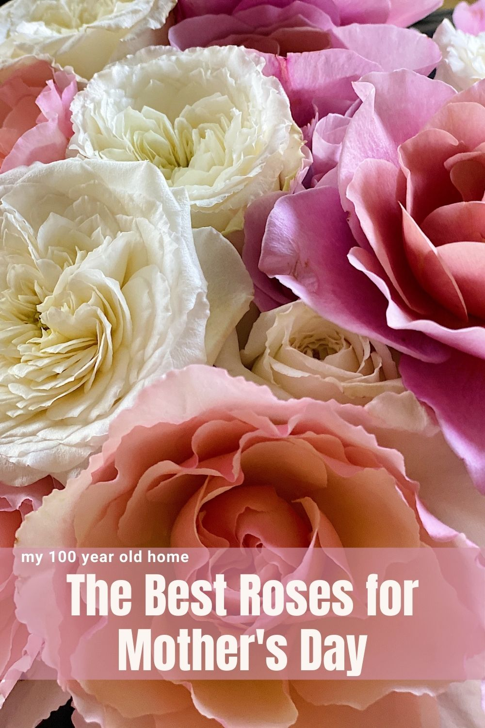 Now is the time to order roses for Mother's Day. Don't wait until it's too late to order these amazing and beautiful roses from Grace Rose Farm!