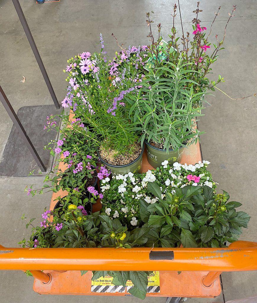 Buying Plants for Backyard Garden