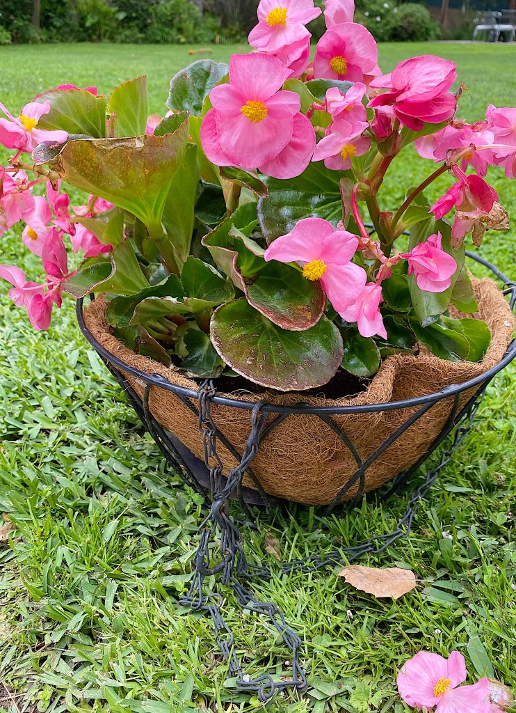 Hanging flower Baskets How To