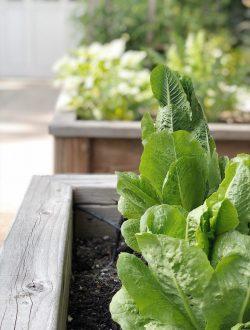 No-Green-Thumb-Vegetable-Garden
