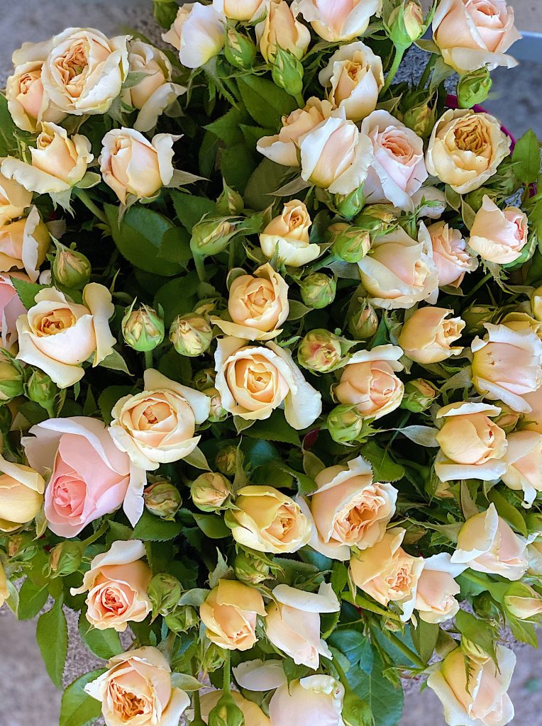 Peach Roses for Mother's Day