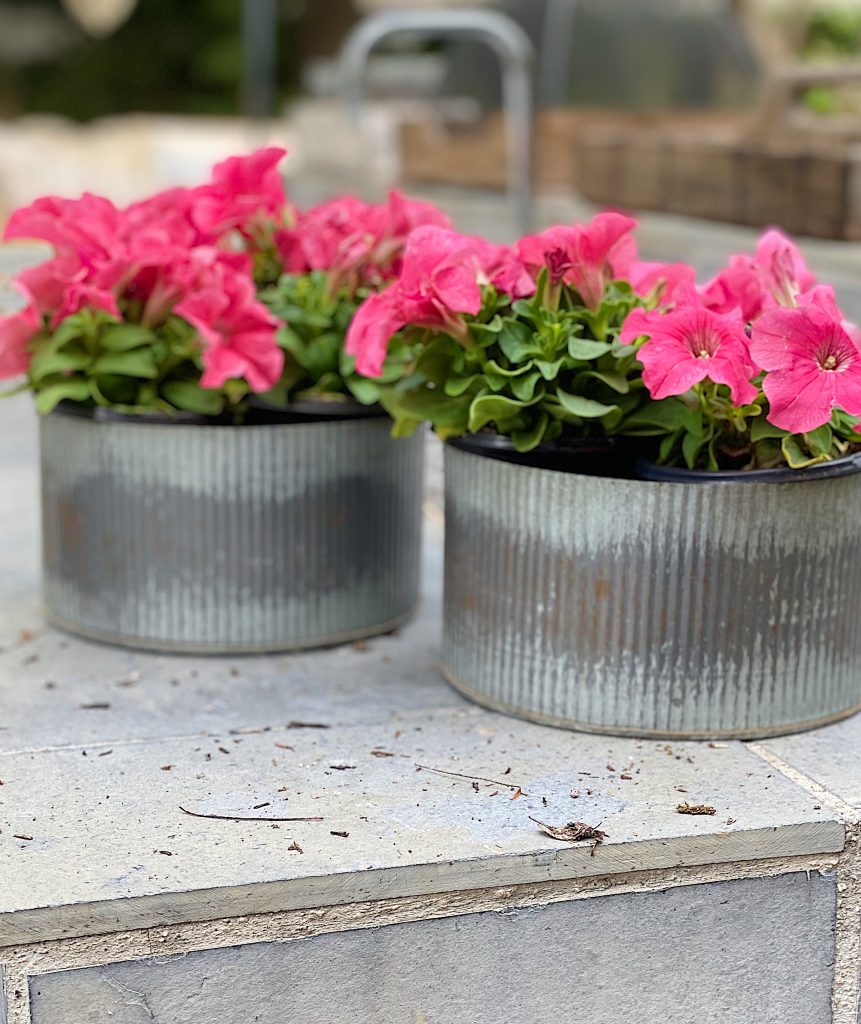 Planters Planted with Pink flowers