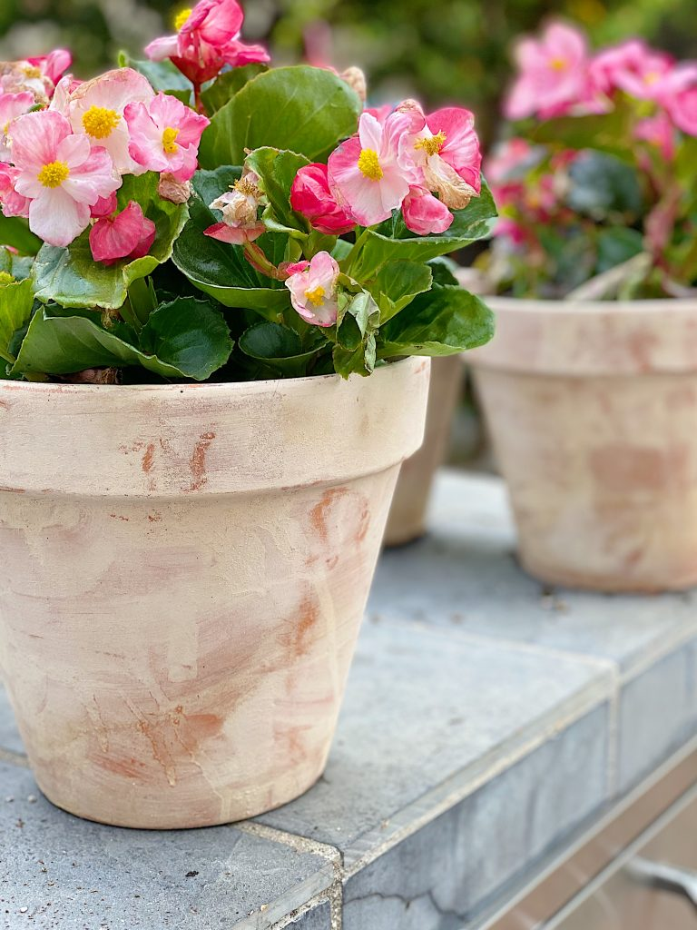Planting the Terra Cotta Pots