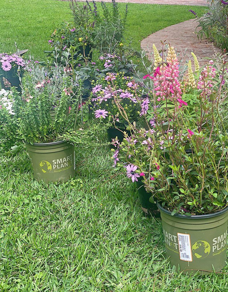 Plants for Backyard Garden