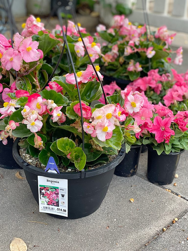 Potted Pink Plants