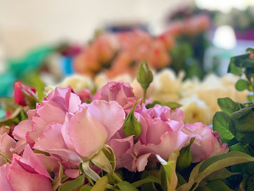 Roses and Roses for Mother's Day at Grace Rose Farm