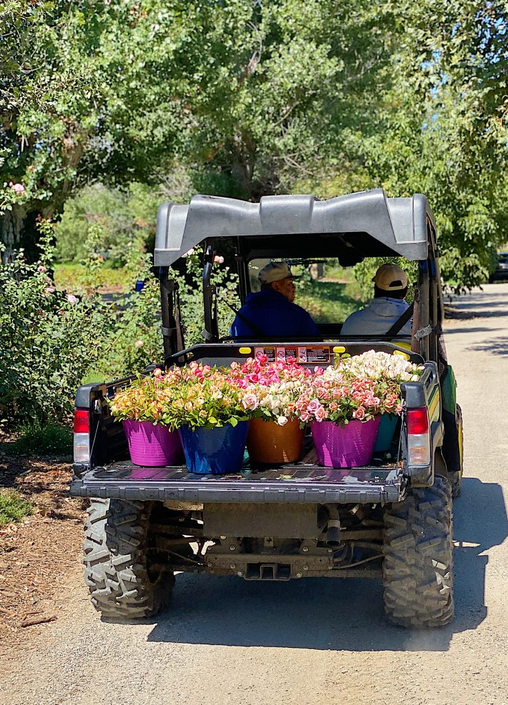 Roses for Mother's Day at Grace Rose Farm