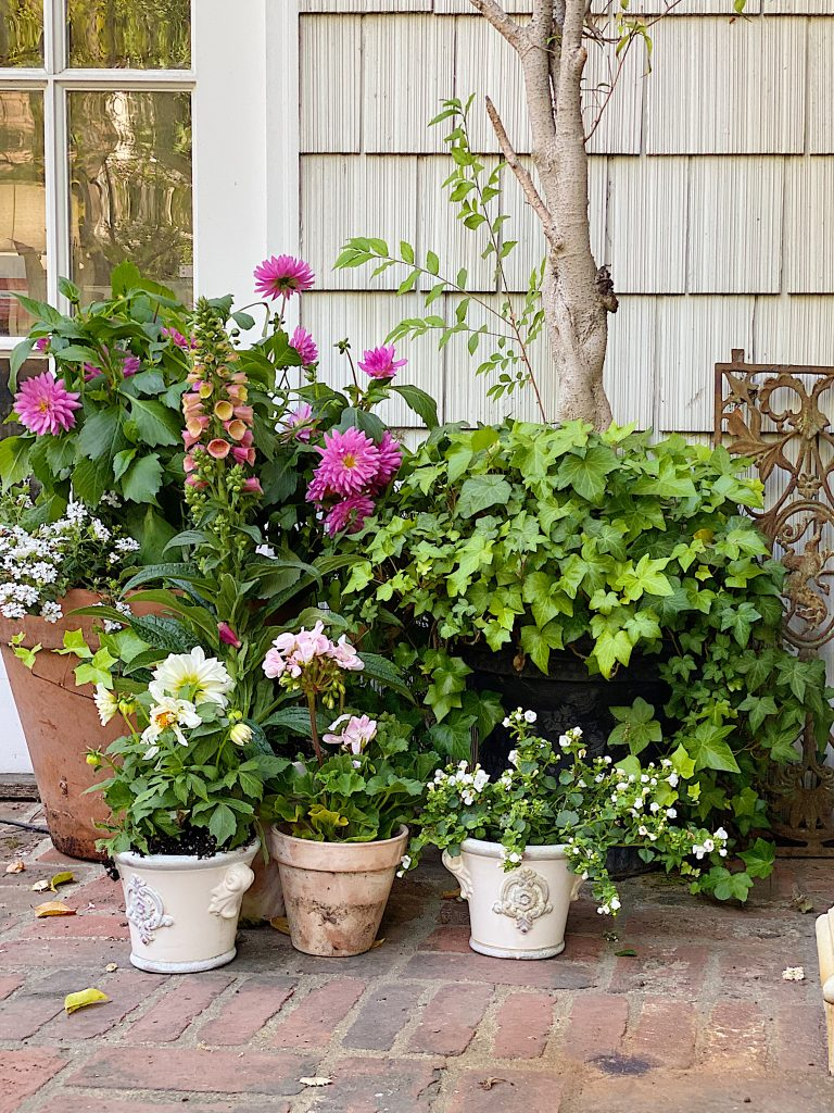 Potted Plants and Potting Bench