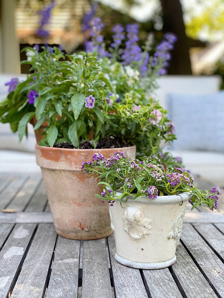 Potting Bench Plants