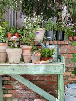 Potting Bench with Pots